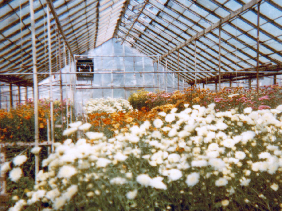 A similar interior perspective, decades later, still shows vibrant floral life in our greenhouse